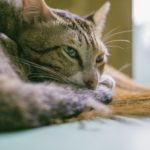 6 Tips To Help Your Sick Pet Get Well
