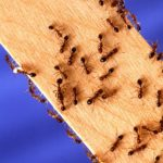 Healthy Insects