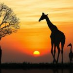 Top African Destinations For A Summer Getaway