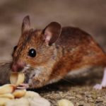 The Importance of Pest Control